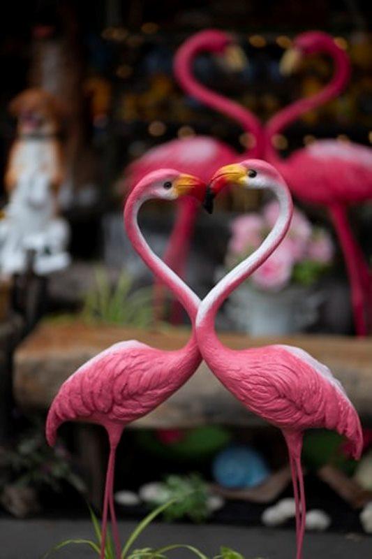 Ciri Ciri Burung Lovebird Jantan Dan Betina Havienu